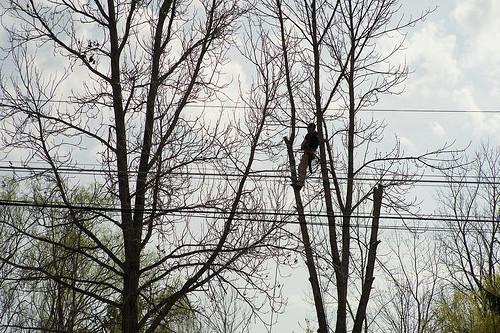 Tree Cutting Service Bury