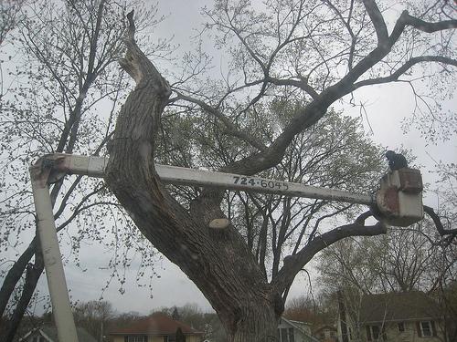 Tree Cutting Service Salford