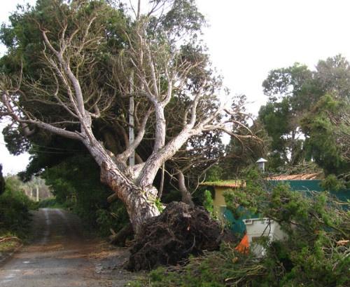 Tree Pruning Sale