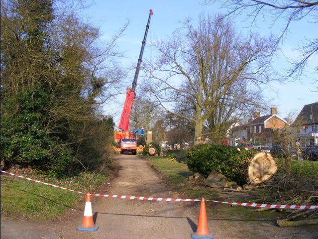 Tree Removal Salford