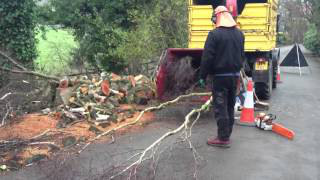 Tree Services Manchester